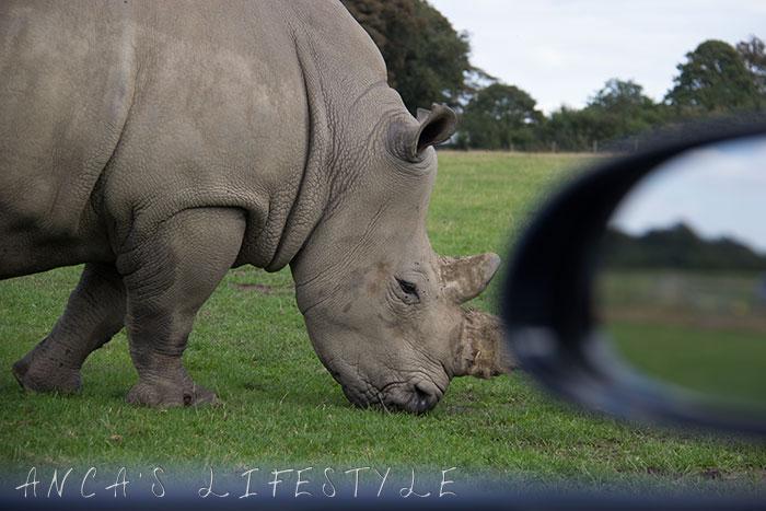 knowsley safari park 09