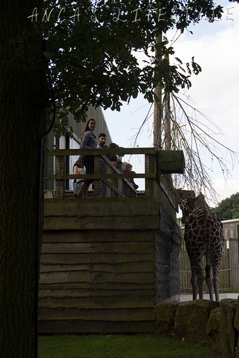 knowsley safari park 32