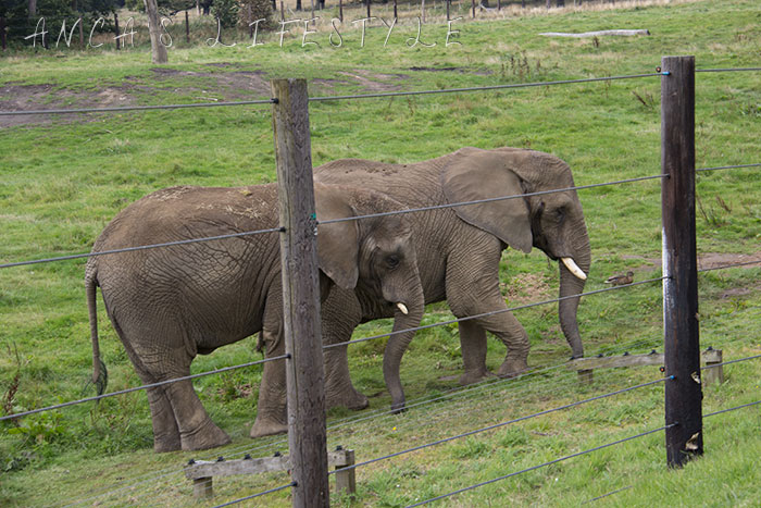 knowsley safari park blog