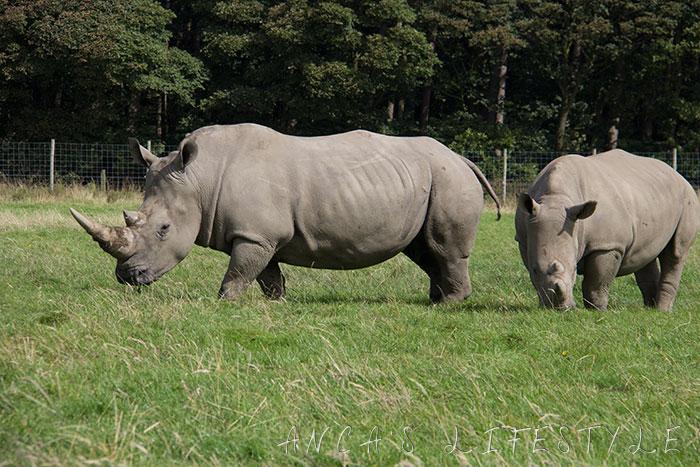 knowsley safari park review 03