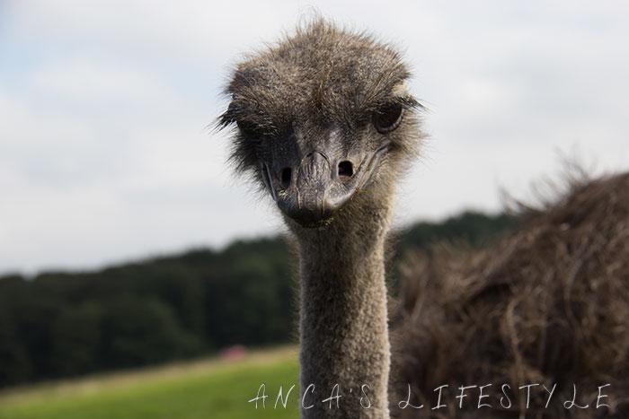 knowsley safari park review 04