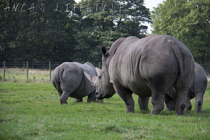knowsley safari park review 07