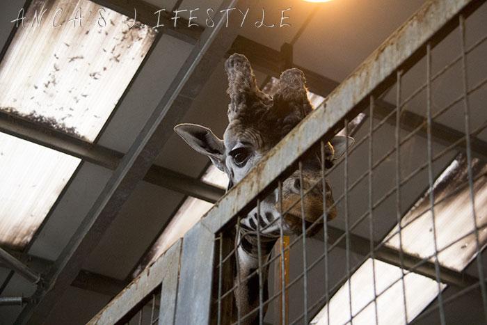 knowsley safari park review 10