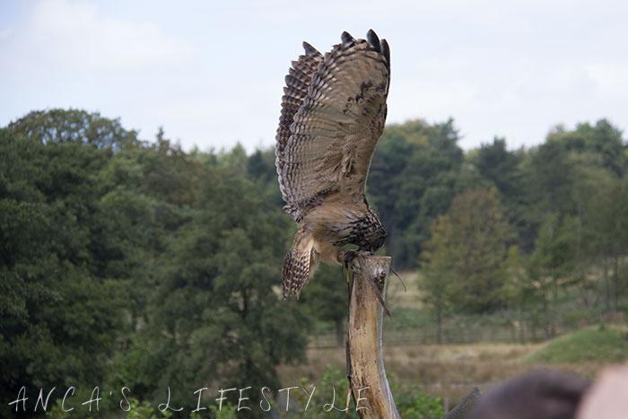 owl display 2