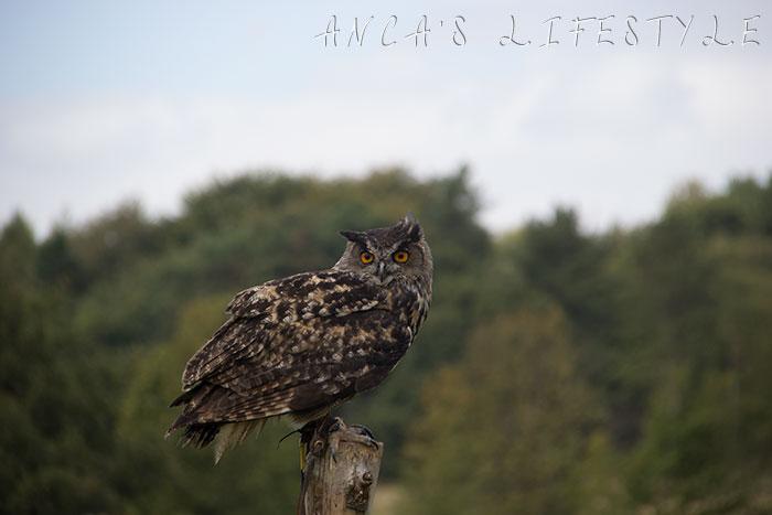 owl display 3