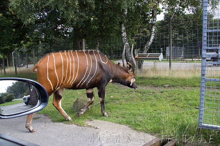 safari park uk 03
