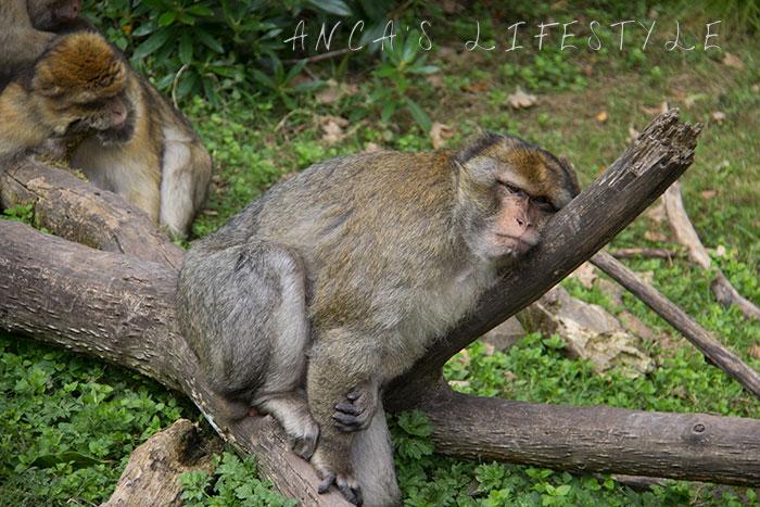 monkey forest 11