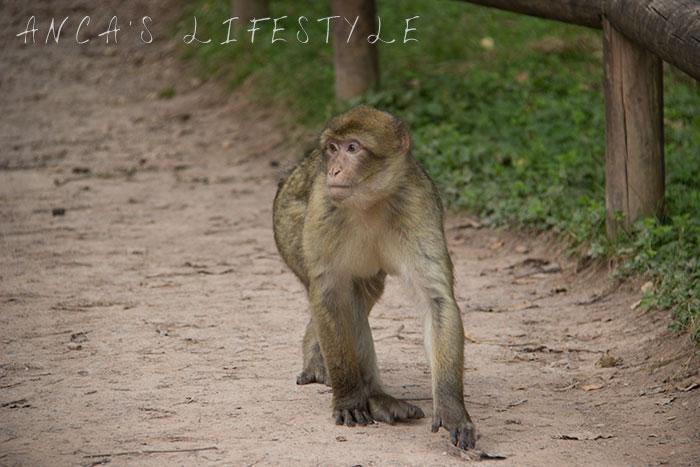 monkey forest 14