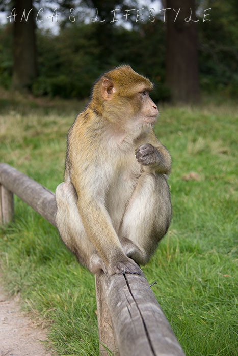 monkey forest 17