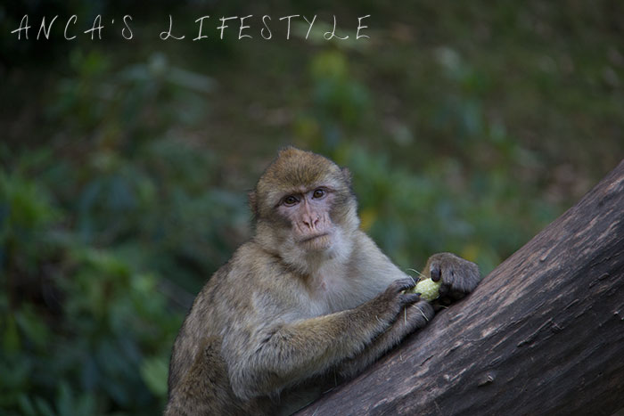 monkey forest 25