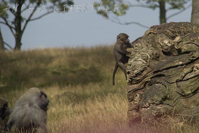 monkeys 8