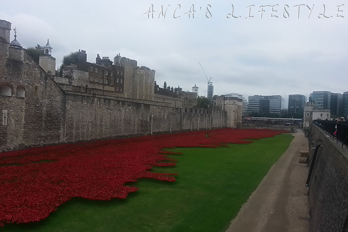 tower of london poppies 5