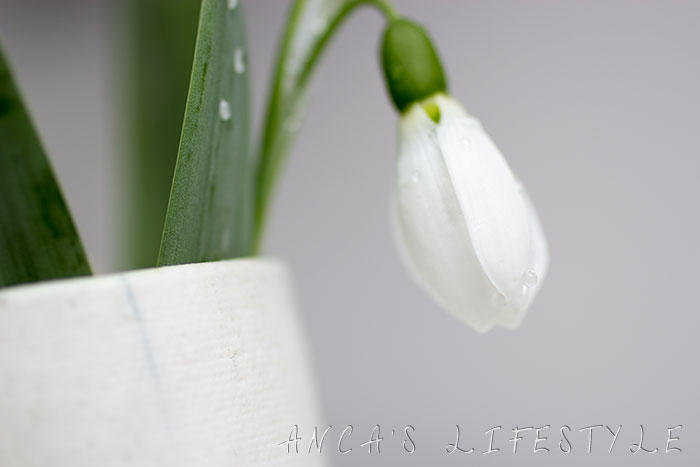 02 snowdrop and handmade vase