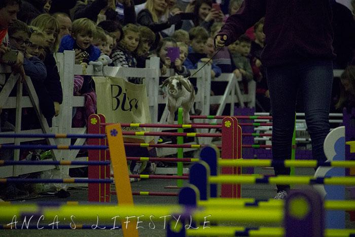 29 rabbit race