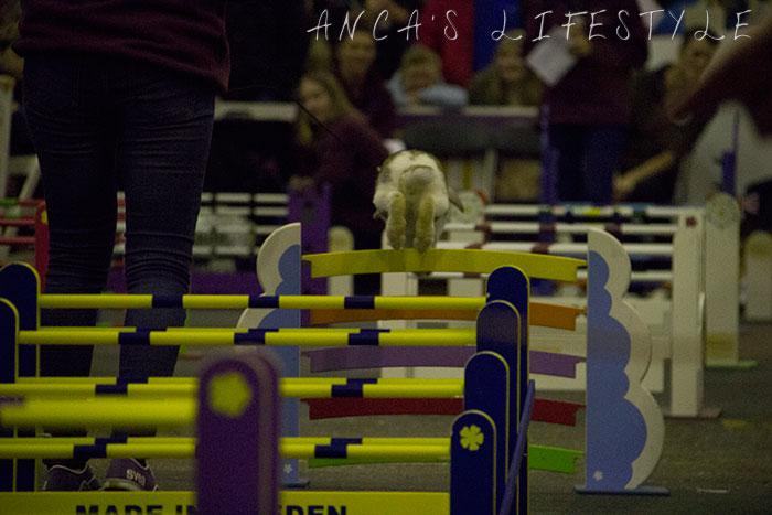 30 rabbit race