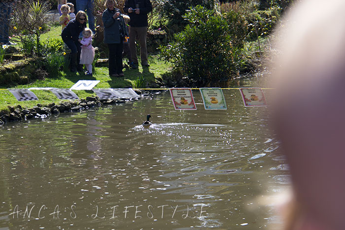 Lymm charity duck race