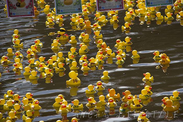 14 Lymm duck race