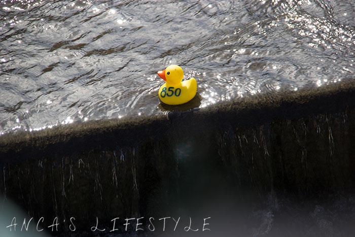 15 Duck race