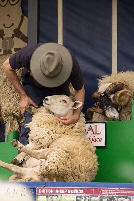 03 Cheshire county show