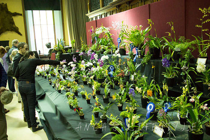 04 Tatton Park and Orchid Show
