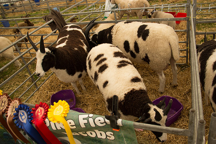 10 Cheshire county show
