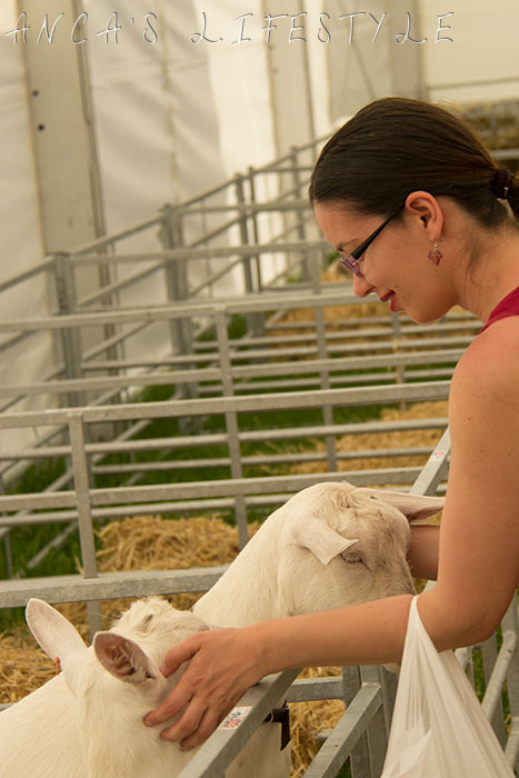 14 Cheshire county show