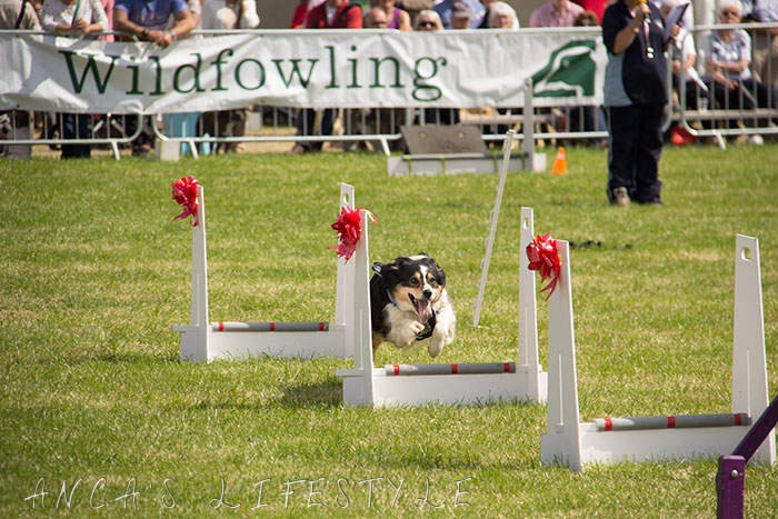17 Cheshire county show