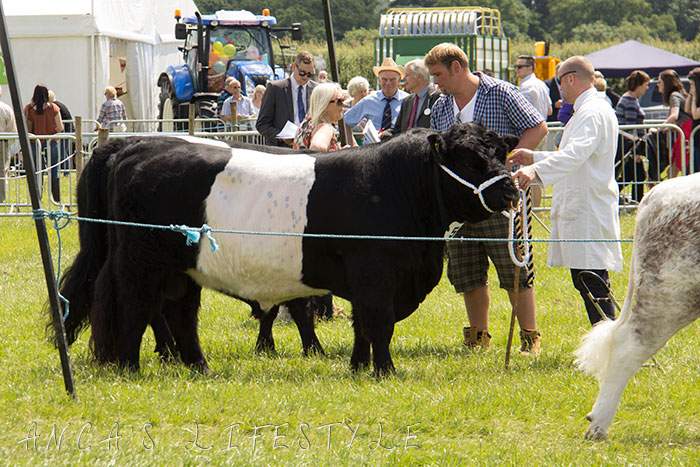 25 Cheshire county show