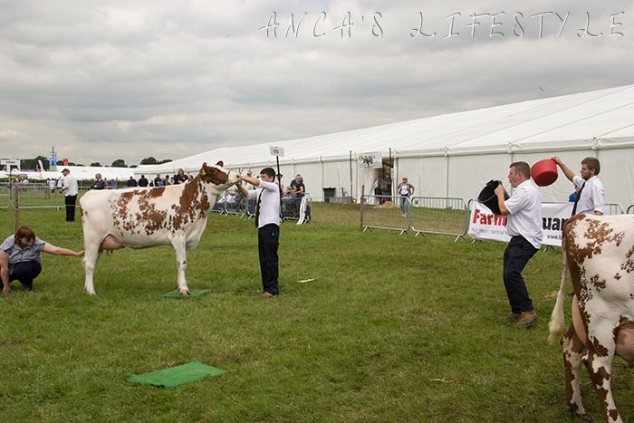 27 Cheshire county show