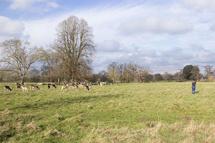 13 Charlecote Park