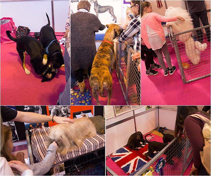 Discover-dogs-03