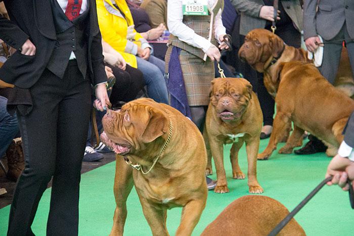 Dog-rings-Crufts-06