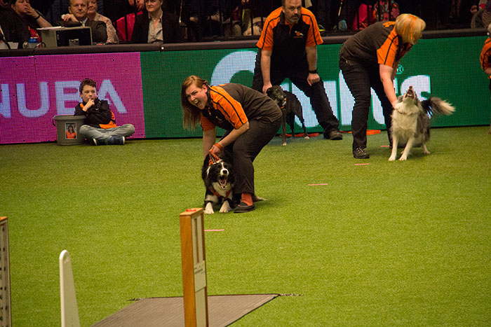 Flyball-Crufts