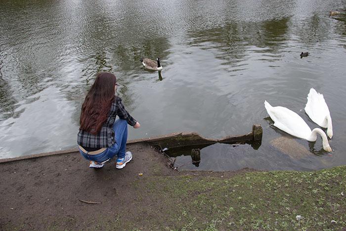 01 Feeding birds