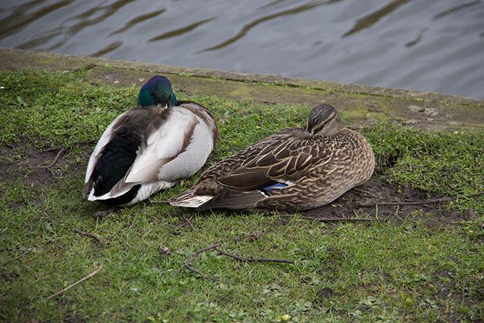 03 Feeding birds