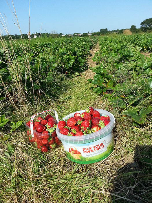 01 Pick your own from a local farm