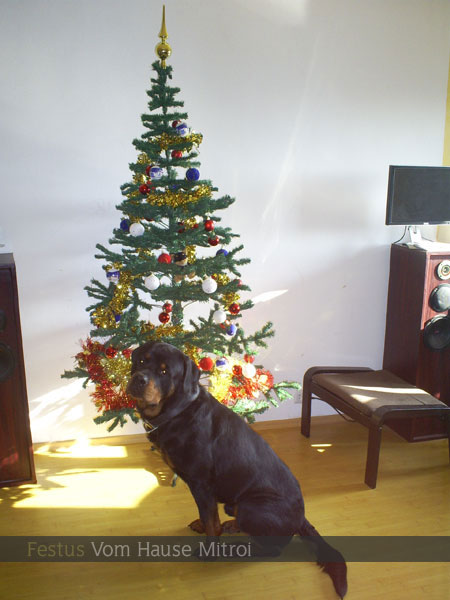 02-christmas-tree-artificial-or-real