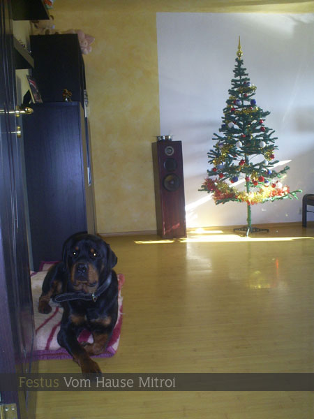 03-christmas-tree-artificial-or-real