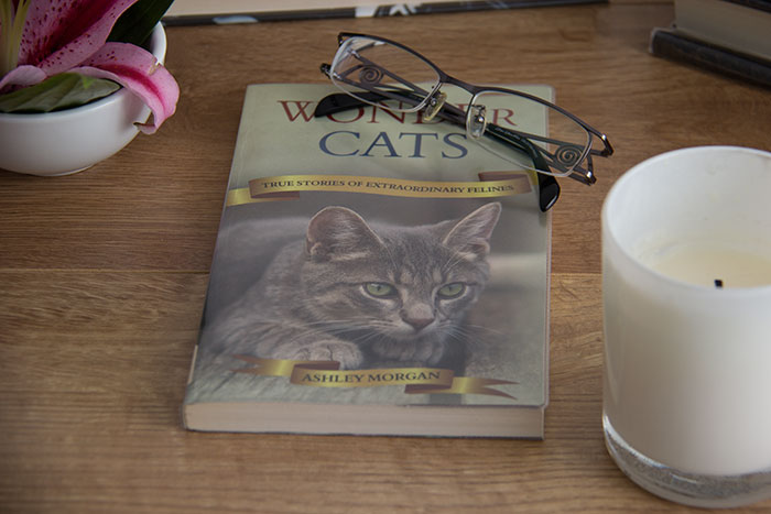 Wonder Cats. True stories of extraordinary felines by Ashley Morgan