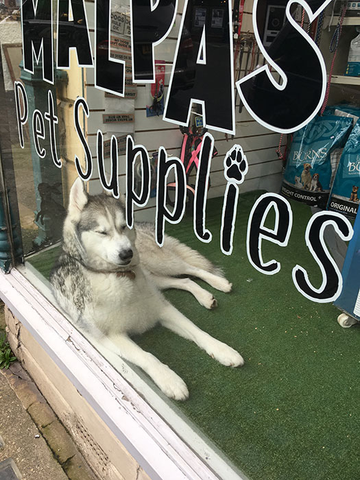 Pet in the window of Malpas Pet Supplies
