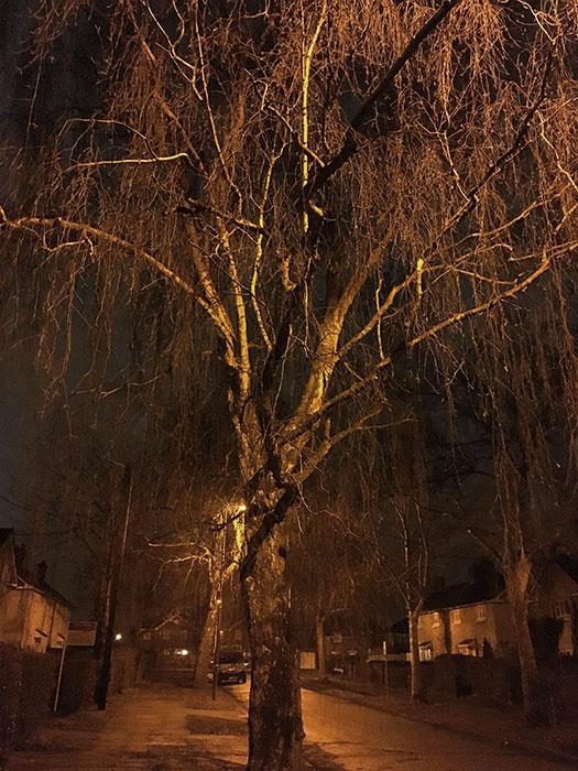 Tree on the street