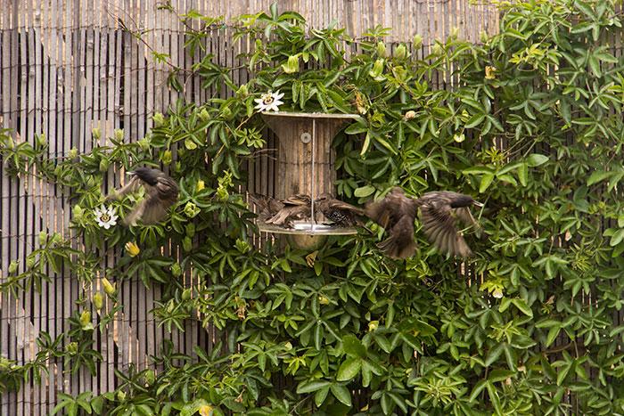 Enjoying the wildlife in our garden