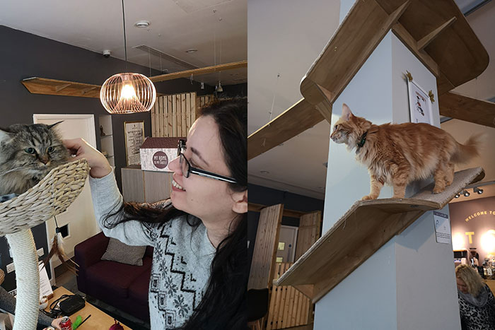 Cat Cafe Manchester. Part of my Manchester Day Trip. Me petting a cat