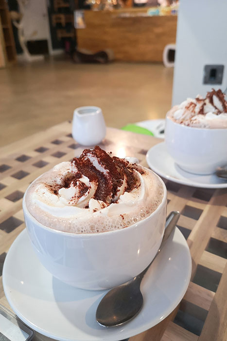 Cat Cafe Manchester. Part of my Manchester Day Trip. Hot chocolate