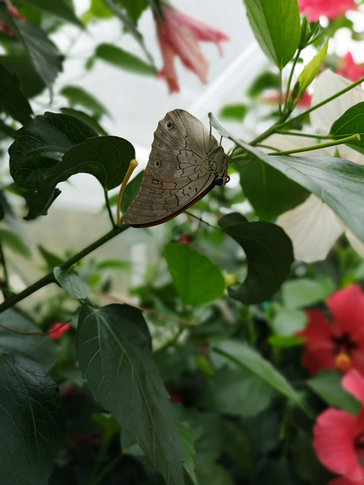 Butterfly House at Blenheim Palace