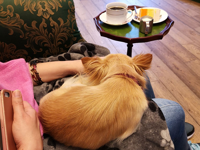 Me with a dog on my lap at Edinburgh Chihuahua Cafe