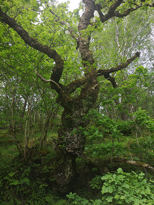 Gorgeous tree at Highland Titles Nature Reserve