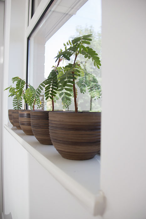 My bedroom - pots with plants