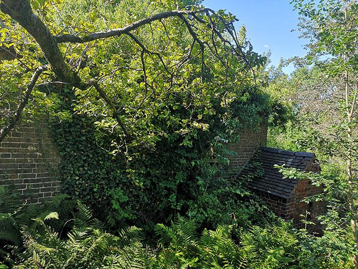 Greenery at New Inn Mill