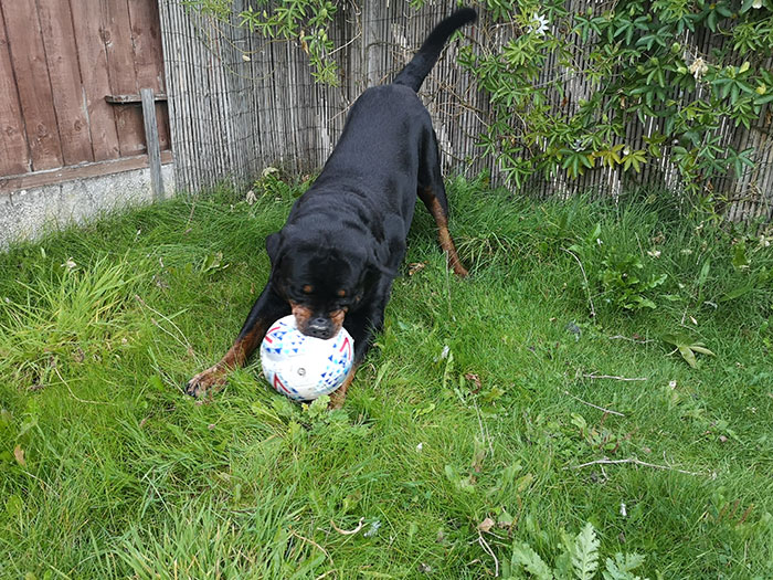 Festus playing with the football in the garden